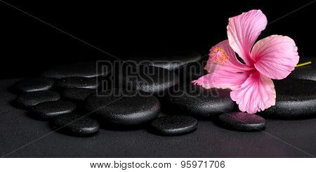 Spa Concept Of Pink Hibiscus Flower On Zen Basalt Stone With Drops, Panorama