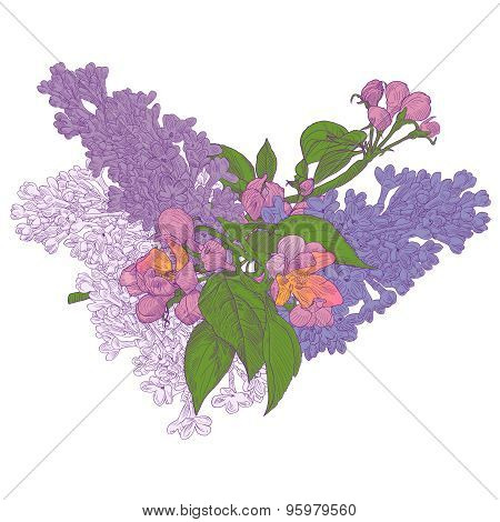 Blooming Twigs Of Lilac And Apple Tree On White Background. Stoc