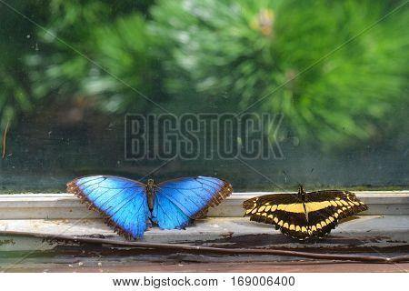 Butterflies on window