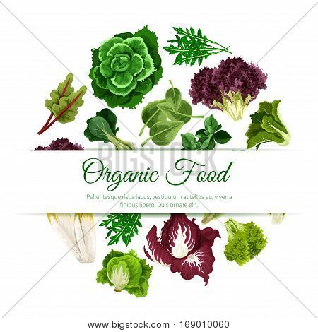 Leafy salads and lettuce vegetables poster with chicory salad and spinach, arugula, mangold kale and collard, lollo rossa and radicchio, romaine and pak choi with sorrel, swiss chard with batavia and gotukola. Vegetarian vegan vector organic food