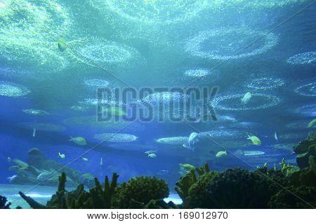 Underwater world in the aquarium with blue water