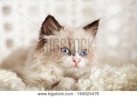 Cute little kitten on white plaid at home, closeup