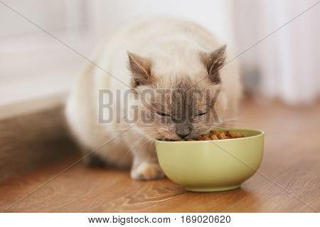 Cute cat eating dry food from ceramic bowl