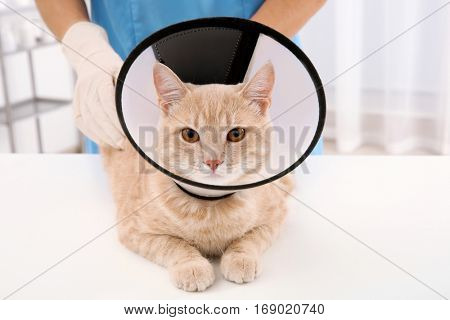 Cat in cone of shame lying on table in vet clinic