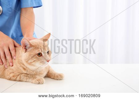 Young veterinarian examining cat in clinic