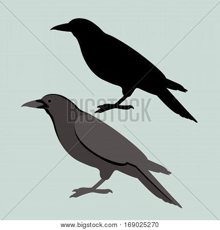 Crow vector illustration style Flat black silhouette