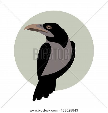 Crow vector illustration style Flat side front