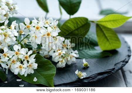 Easter concept - close up of bird cherry in blossom on black stone background selective focus