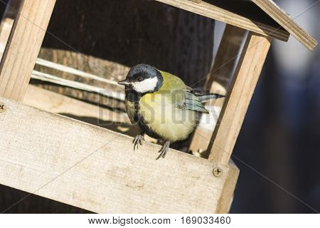 Great tit Parus Major close-up portrait at bird feeder with bokeh background selective focus shallow DOF