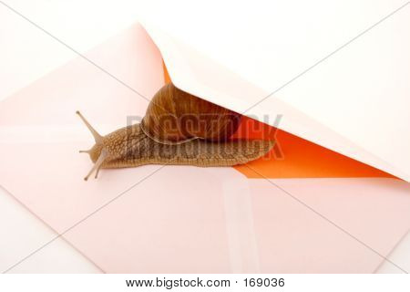 snail and mail envelope closeup poster