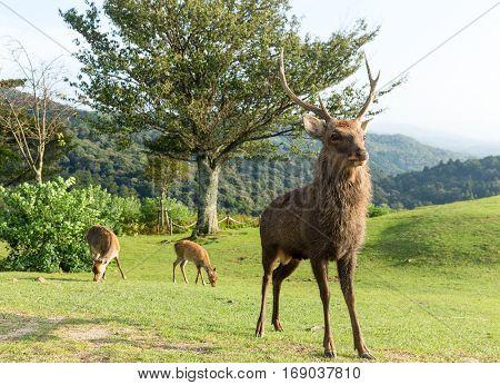 Deer on mountain
