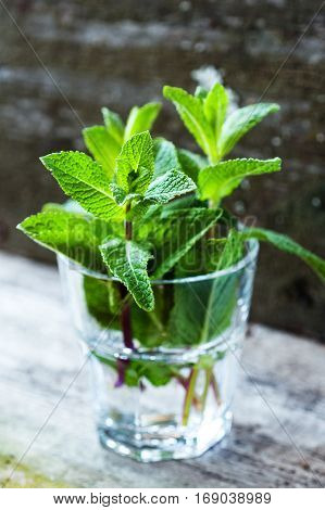 Fresh organic mint in glass on wooden background selective focus toned