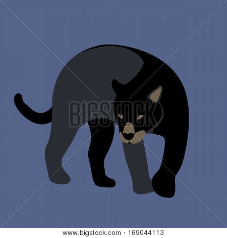cougar vector illustration style Flat front side