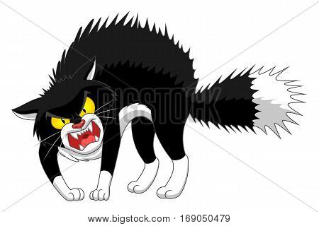 Angry cartoon black cat on the white background.