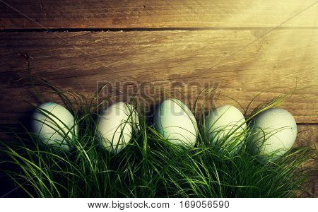 Easter Eggs on Fresh Green Grass on Wooden Background with Sunny Light Beams. Horizontal with Copy Space. Easter or Spring Concept. Toning.