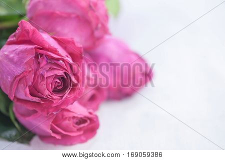 Beautiful Bright Bouquet Of Roses