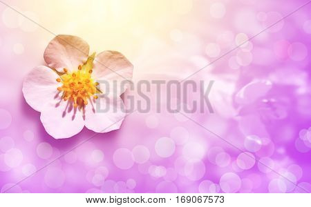 Greeting card with beautiful flower on pink background