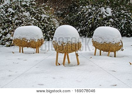 Straw headless sheep under the snow in the garden