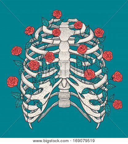 Illustration of human rib cage with roses. Line art style. Boho vector realistic