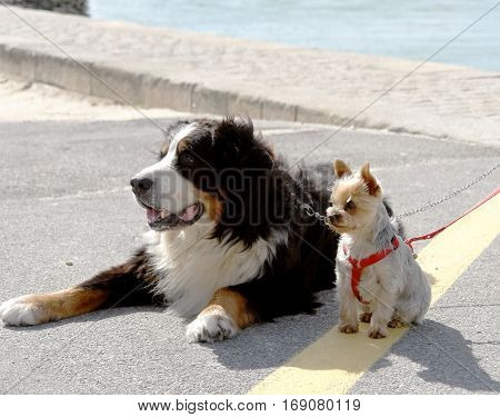 Big and small dogs on leashes are sitting on the street.