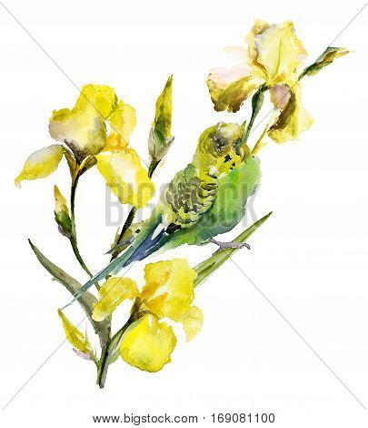 Green and yellow parrot (budgie) sitting on yellow iris twig on white background. Watercolor painting hand drawn.