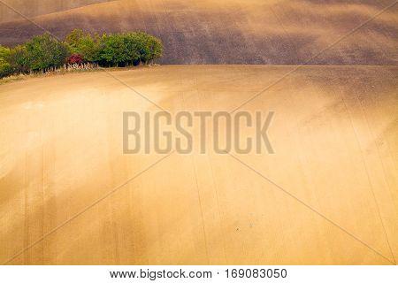 Moravian wavy fields with islands of tree in Czechia.