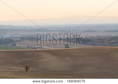 Crude and monochromatic fields with lonely tree in South Moravian Czechia.