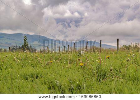 Ecuadorian Andean Landscape Scene