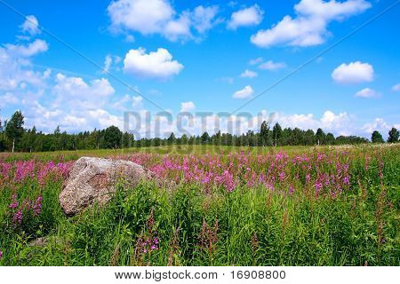 lilac flowers on field poster
