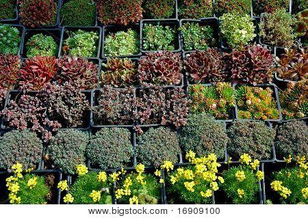 plant fair segment