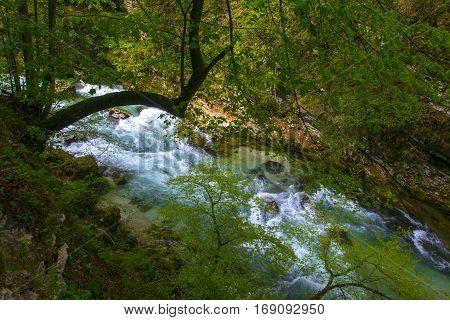 Mountain stream flowing through gorge. Vintgar Gorge near Bled, Triglav National park, Slovenia