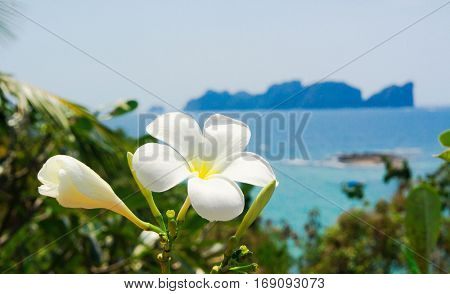 Foliage Sky Tropical Verdure