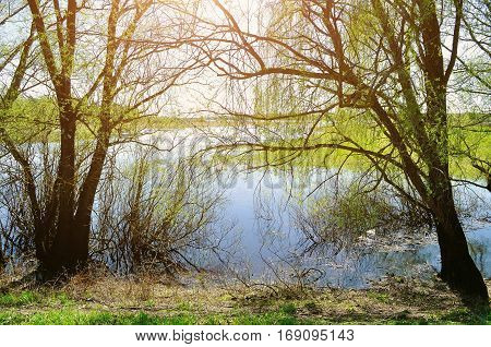 Spring landscape - spring willow under sunshine on the bank of the small river, colorful nature spring landscape. Spring river - spring landscape