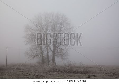 Tree foggy field landscape. Sadness and loneliness concept. Early winter morning, frost on the ground. noise film effect photo