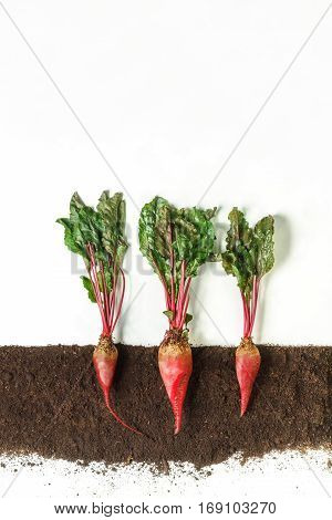 Beetroot grow in ground, cross section, cutout collage. Growing plant with leaves isolated on white background. Agricultural, botany and farming concept