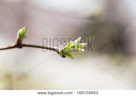Tree branch green leaf macro view. springtime and new life concept. soft pastel background. shallow depth of field.