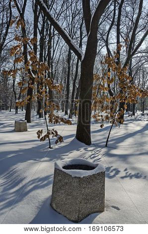 Magnetic winter scene of forest and young sapling oak-tree in park, Sofia, Bulgaria