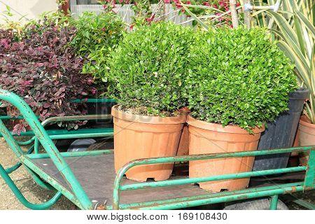 Trolley For Shopping In A Garden Center