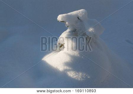 Snowbound little fir in winter forest in sunny winter day.