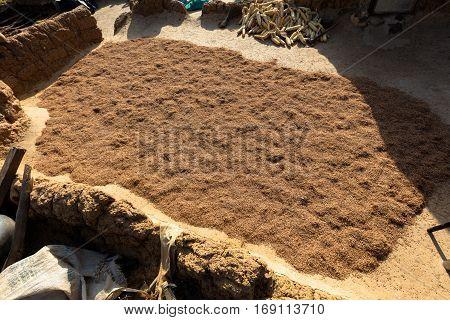 Millet  In Lobi Village