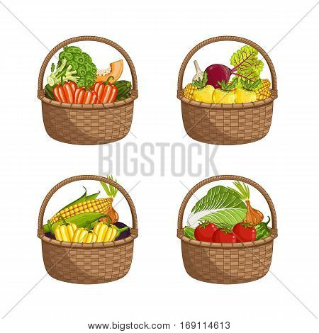 Fresh organic vegetable in wicker basket set isolated vector illustration. Eco farming, vegetarian nutrition, organic healthy diet, vegan retail. Broccoli, peppers, onions, eggplant, cabbage in basket