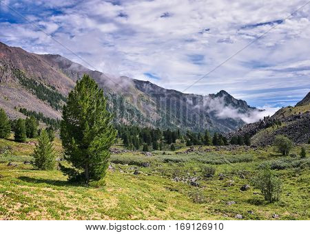 Siberian pine and mountain tundra. Eastern Siberia. Russia