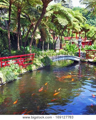 Lovely pond with goldfish. The banks of the pond fenced railing red Chinese-style. Across the pond spanned by graceful bridge