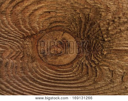Wood background,Raw,brown,wild wood ilustration.Wood scenery in winter
