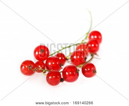 Red currant fruit closeup isolated on white. A bunch of red currant.