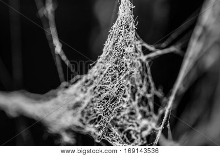 Old dusty spider web cobweb in black and white on attic with sun light on it