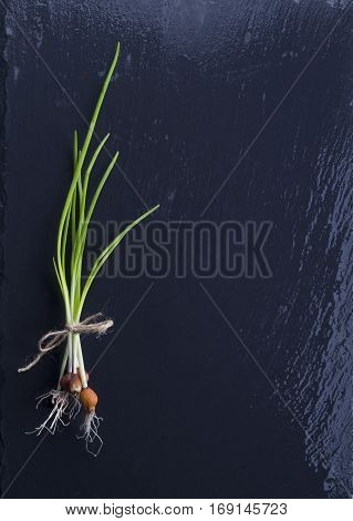 Green onion on the black background. Scallions