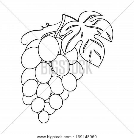 Bunch of grapes icon in outline design isolated on white background. Wine production symbol stock vector illustration.