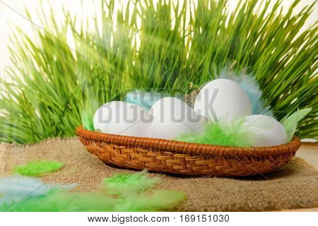 Chicken White Eggs With Feathers In Basket On Hessian And Spring Green Grass With Sun Beams, Easter