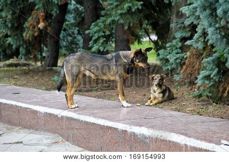 Two homeless dog in the city park